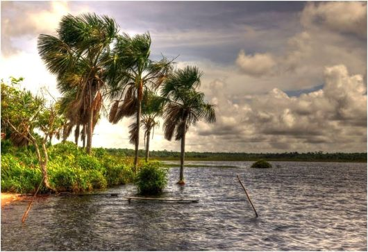 Lake Capoey - Guyana