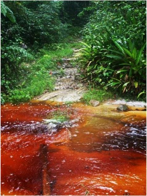 Tea Water Creek