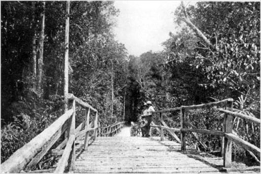 Entrance to the Rupununi Cattle Trail- circa 1920