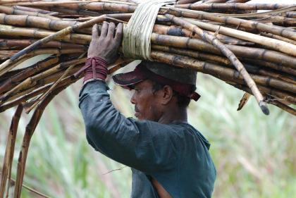 East Indian Cane Cutter - Guyana - Photo by John Gimlette