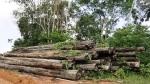 Guyana- logging