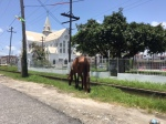 A stray horse on Church Street near St. George's Cathedral.