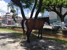 A stray horse on the Avenue of the Republic near the Bank of Guyana