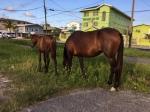 Stray Horses on Thomas Street near the St. Ann.s Orphanage